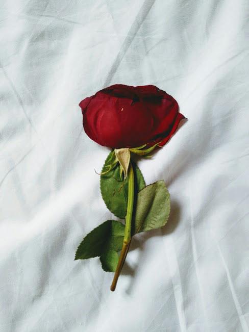 Frases De Amor 100 Romanticas Bonitas Cortas Para Novios De