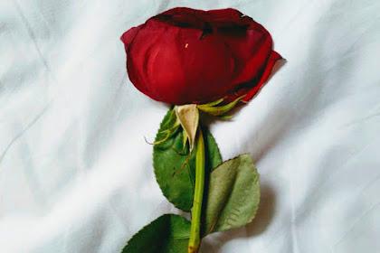 Frases Cortas De Amor De Canciones Romanticas