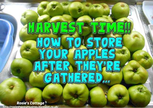 An Early Harvest Of Beautiful Scottish Apples