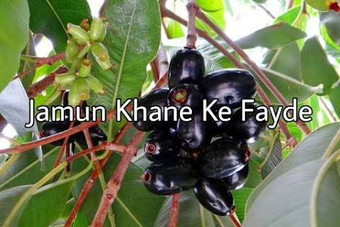Jamun Khane Ke Fayde | Java Plum Ke Fayde in Hindi