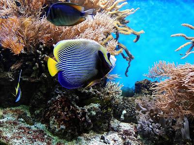 Das Aquarium Poem del Mar auf Gran Canaria öffnet wieder am 1. Mai