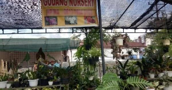 Marak Pencurian Bunga di Medan, Polisi Lakukan Penyelidikan