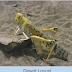 India battles against the worst locust attack in 27 years/भारत में 27 साल में  टिड्डीयों का सबसे ख़तरनाक हमला