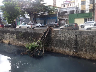 Árvore cai e fica pendurada no Rio Lucaia. Se despencar será arrastada para o mar