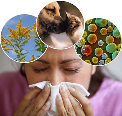 https://1.bp.blogspot.com/-O9jV4AiYXMA/WxeGTF7GbEI/AAAAAAAA8QE/Z2a3IGn-z5YWw5ft3XaPg0JLcqqCGX6DQCLcBGAs/s600/allergies.jpg