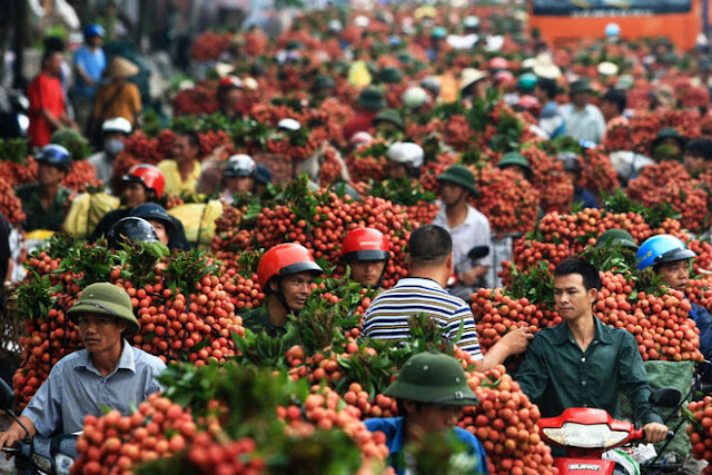 Reasons why vietnam attracts tourists 3