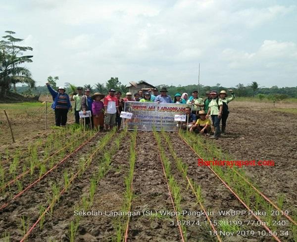 Petani Desa Pangkan Kenali Organisme Pengganggu Tanaman dengan Sekolah Lapang
