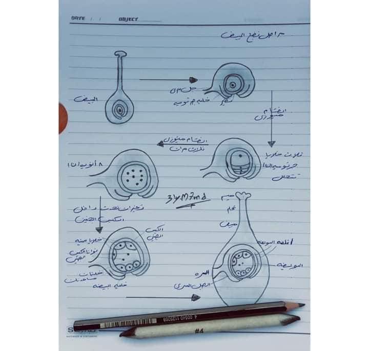 اهم رسومات منهج الاحياء للصف الثالث الثانوي بخط أ/ عماد بدوي 8