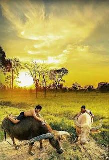 Download Wallpaper Pemandangan Alam Pedesaan