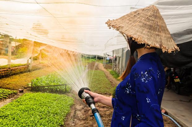 বৃক্ষরােপণের প্রয়োজনীতা,farmer,watering