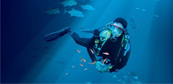 Chương trình lặn ở S.E.A Aquarium rất thu hút du khách