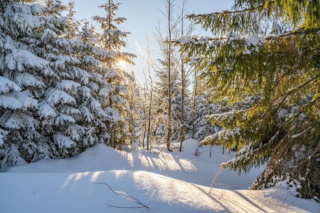 Wanderung auf den Lusen  Winterwandern im Nationalpark Bayerischer Wald 07