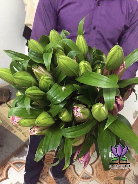 Hoa ly kep