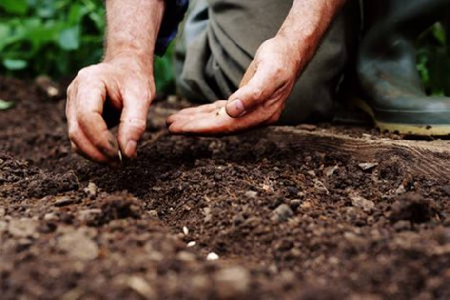 Man-planting-a-seed