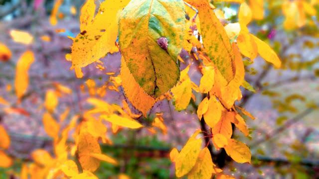 Żółte jesienne liście na drzewie