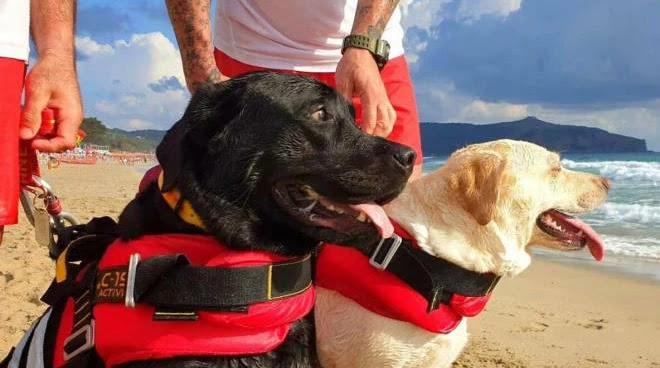 Due cani bagnino salvano una quindicenne