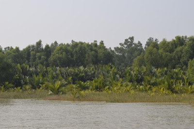 Sundarbans the largest mangrove forest
