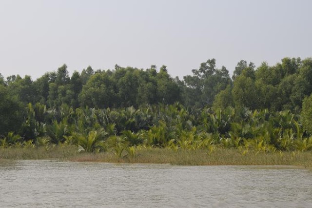 Sundarbans the largest mangrove forest | Location and area