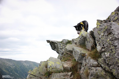 border collie on rocks in the mountains