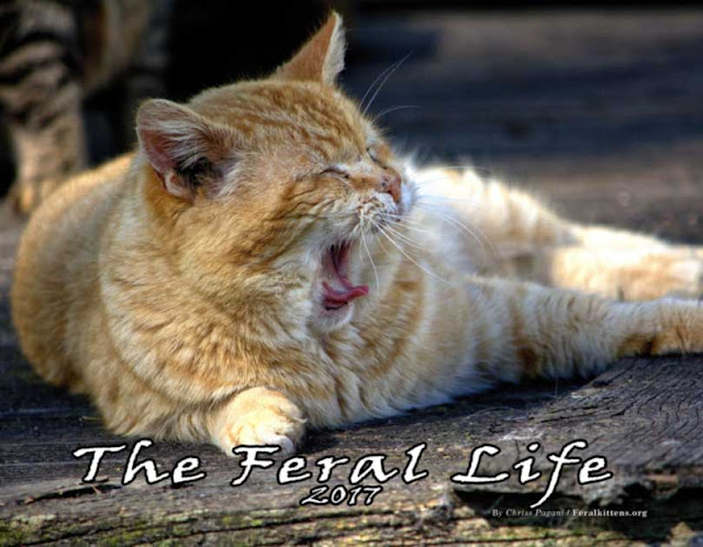 The Feral Life 2017 Beautiful Cats Calendar