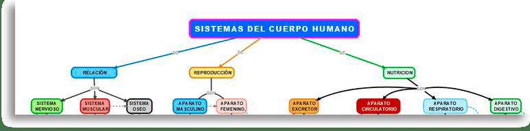 segunda parte de como hacer un mapa conceptual sobre el cuerpo humano