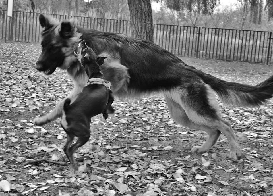 Mały pies i duży pies