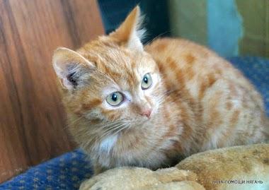 Кошка Глаша. Если вы любите рыжих кошек – наша Глаша - то, что вы ищете!