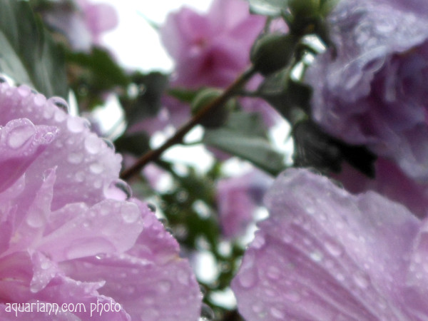 Raindrops on Flowers Macro
