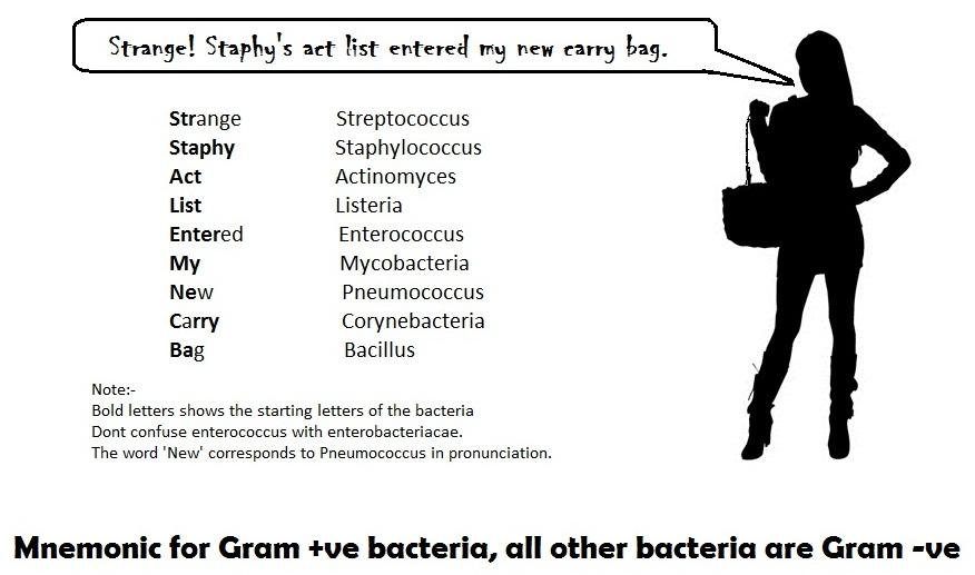 List Of Bacteria