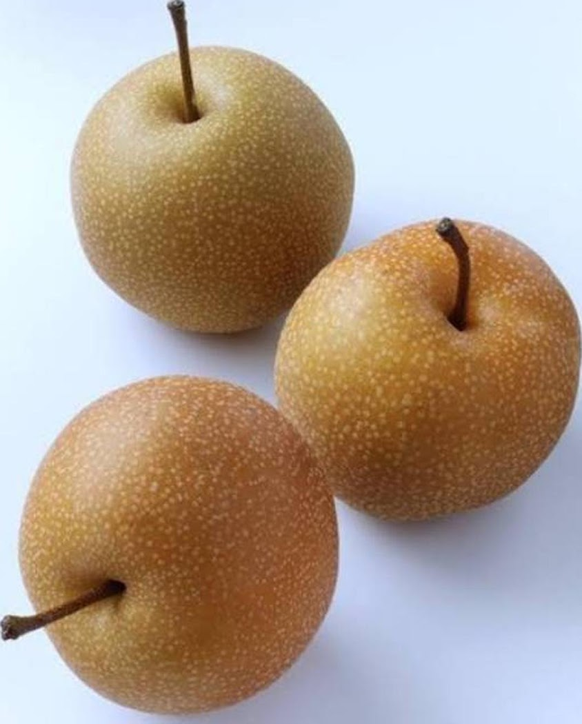 Bibit pear coklat asia Madiun
