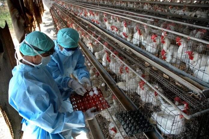 Ποιες πτηνοτροφικές μονάδες μπαίνουν στον Αναπτυξιακό