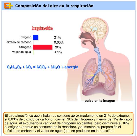 http://www.educaplus.org/play-58-Composici%C3%B3n-del-aire-en-la-respiraci%C3%B3n.html