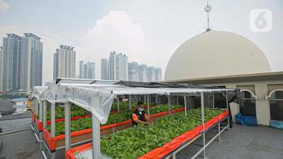 Pemberdayaan Ekonomi dari Masjid: Tanam Sayur di Atap Masjid