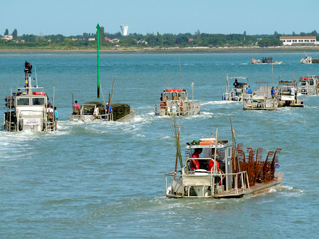 Oyster boats heading out to the oyster beds, Marenne Oléron, France. Photo by Loire Valley Time Travel.
