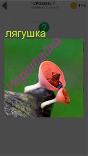 на пне в цветке сидит маленькая лягушка 7 уровень 400+ слов 2
