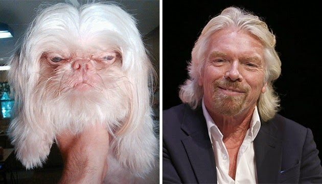 Dog Looks Like Richard Branson