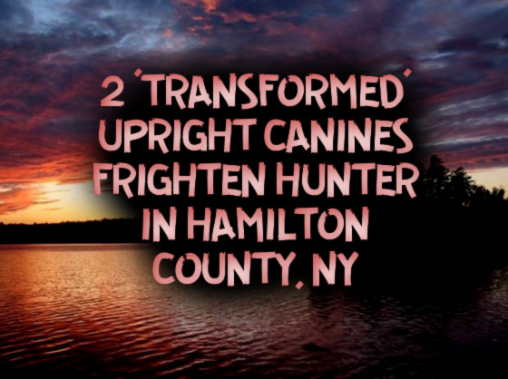 2 'Transformed' Upright Canines Frighten Hunter in Hamilton County, New York