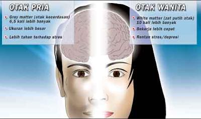 Perbedaan Otak Laki-laki dan Perempuan Fakta Unik