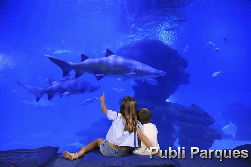 Big Blue - Familia