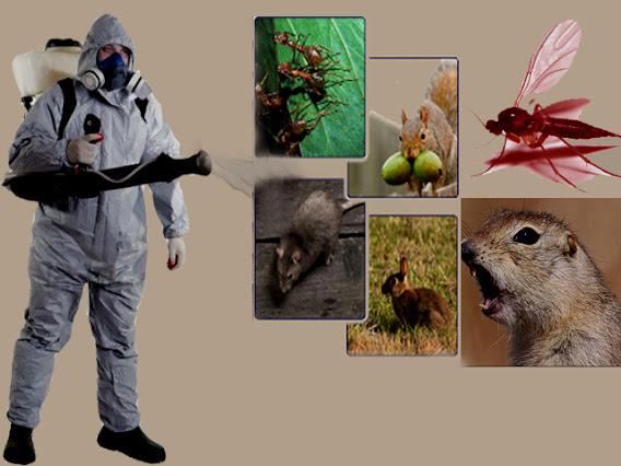 رش مبيدات ام القيوين , مكافحة حشرات ام القيوين , مكافحة الصراصير بام القيوين , مكافحة النمل الابيض بام القيوين , مكافحة الفئران بام القيوين , مكافحة الحمام بام القيوين , رش دفان بام القيوين , تركيب طارد حمام بام القيوين , رش الناموس والذباب بام القيوين , مكافحة العته بام القيوين , افضل شركة رش مبيد بام القيوين , شركة مكافحة الحشرات بام القيوين , رش الحشرات في ام القيوين , شركة رش صراصير بام القيوين , مكافحة الحشرات في ام القيوين , شركة مكافحة البق بام القيوين , شركة رش العثة بام القيوين , ارخص شركة رش مبيد بام القيوين , مكافحة الكلاب بام القيوين , مكافحة الثعابين بام القيوين , مكافحة الوزغ بام القيوين , مكافحة الناموس والذباب , رش الناموس , رش الذباب , ابادة الحشرات الطائرة , ابادة الحشرات الزاحفة , شركة مكافحة حشرات بام القيوين , شركة متخصصة في مكافحة الحشرات , شركة مكافحة بق الفراش , شركة رش حشرات , افضل شركة مكافحة حشرات , شركة رش صراصير , شركة رش صراصير بام القيوين  , مكافحة الصراصير , بيع المبيدات الحشرية مسقط , شركة مكافحة الحشرات , شركات مكافحة الحشرات في صحار , الشركة العمانية للمبيدات الحشرية وملطفات الجو , بيع مبيدات حشرية مسقط , دواء الرمة , محلات بيع مواد مكافحة الحشرات , العالمية للمبيدات الحشرية