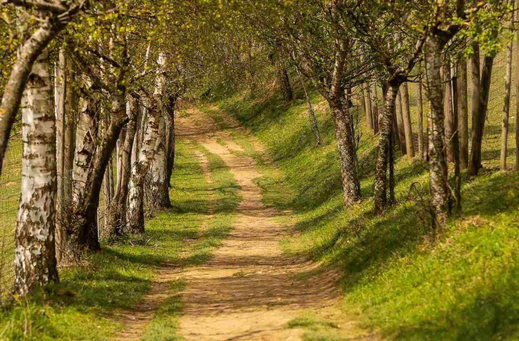 Granite Hills Trail -- Spring