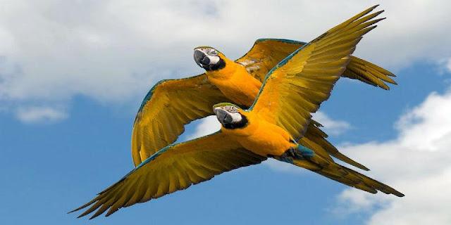 استخدام الاعدادات المناسبة في الكاميرا لتصوير الطيور
