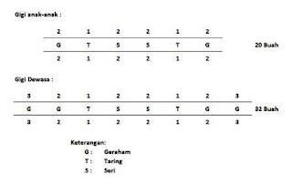 Jumlah dan Susunan Gigi