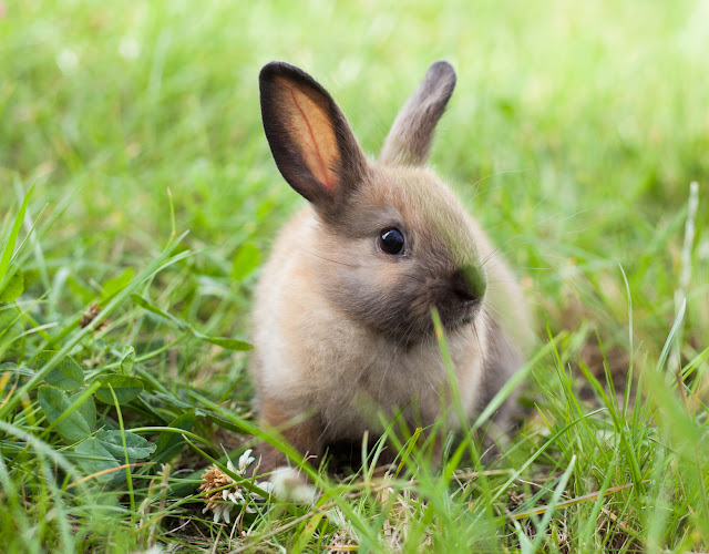 fakty o królikach