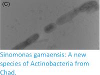 https://sciencythoughts.blogspot.com/2019/07/sinomonas-gamaensis-new-species-of.html