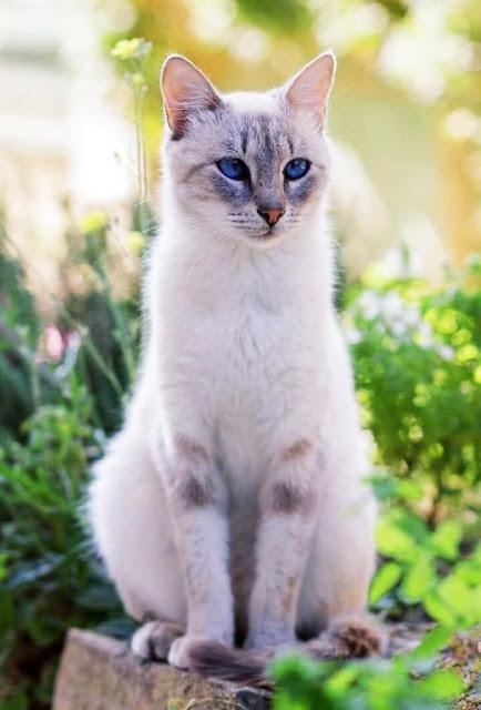 Beautiful Cat Pictures
