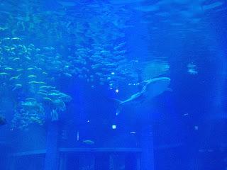 spettacolare vasca dell'Oceano