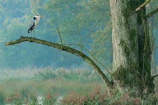 Fauna Parque Natural Schwalm-Nette