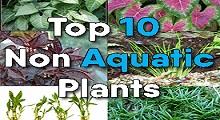 Top 10 non aquatic plants