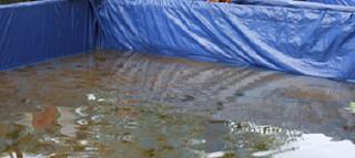 Cara Budidaya Ikan Koi di kolam tanah,Cara Budidaya Ikan Koi di kolam terpal,Cara Budidaya Ikan Koi di aquarium,Cara Budidaya Ikan Koi bagi pemula,Cara Budidaya Ikan Koi fdf,